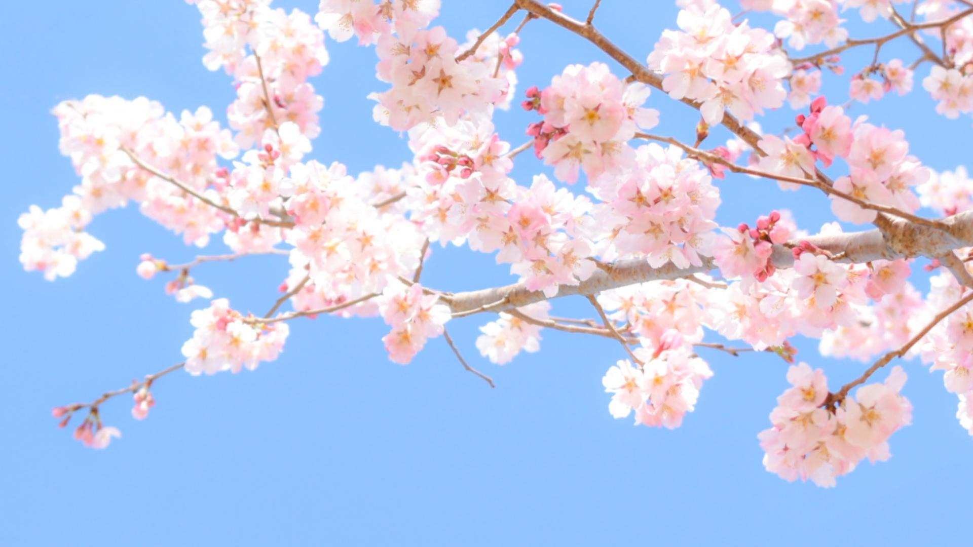 カウンセリング《明石・神戸市西区》うつ病人間関係の悩み解決